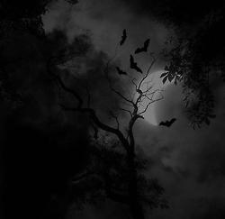 a blog bat